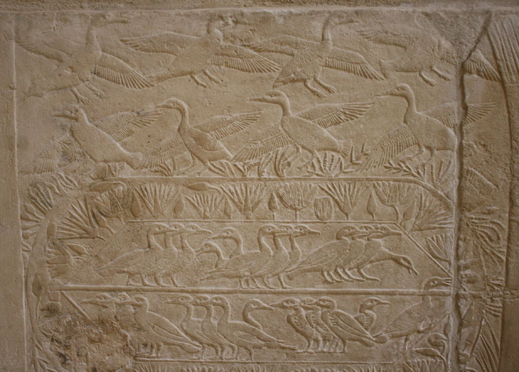 Images of Birds in the Tombs at Saqqara, Egypt