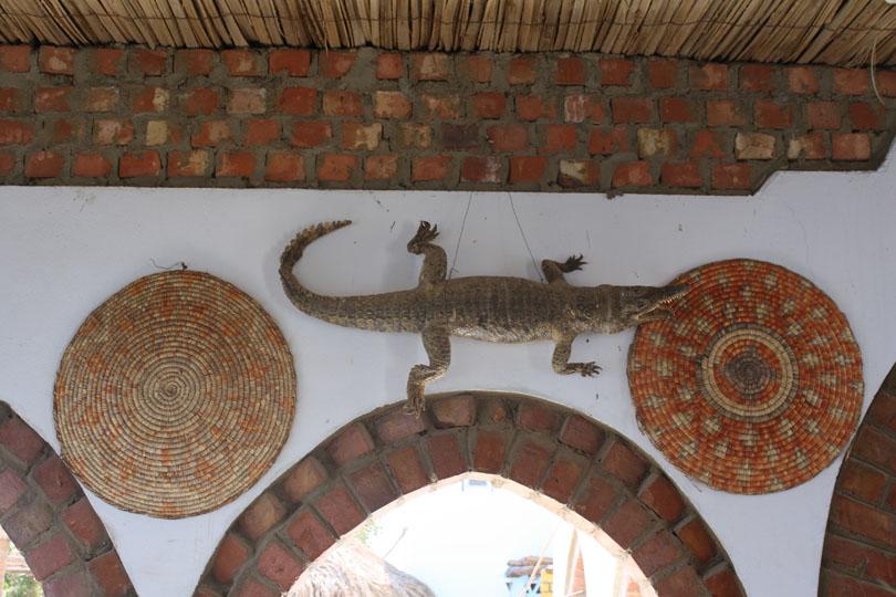 Crocodile on an Indoor Wall
