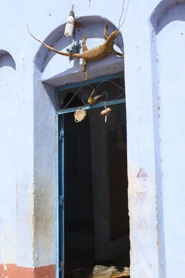 Crocodile Mounted Above a Door